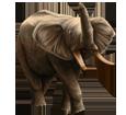 Elephant ##STADE## - coat 16022