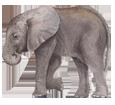 Elephant ##STADE## - coat 52