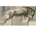 Wildebeest ##STADE## - coat 71