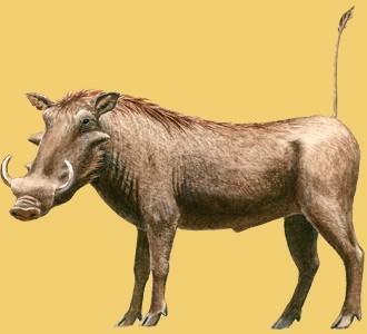 Take in a warthog species animal of the savannah
