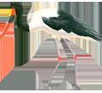 Saddle-billed Stork ##STADE## - coat 34