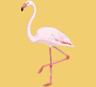 Flamingo ##STADE## - coat 68