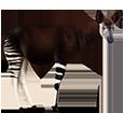 Okapi ##STADE## - coat 5